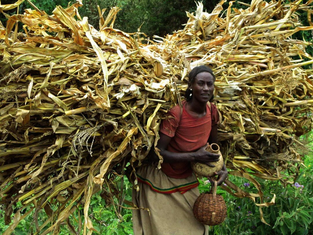 """SENEGAL- ETIOPIA. """"PONTI: inclusione sociale ed economica, giovani e donne, innovazione e diaspore"""""""